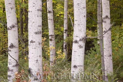 Tree Species - LEAF - Wisconsin's K-12 Forestry Education ...