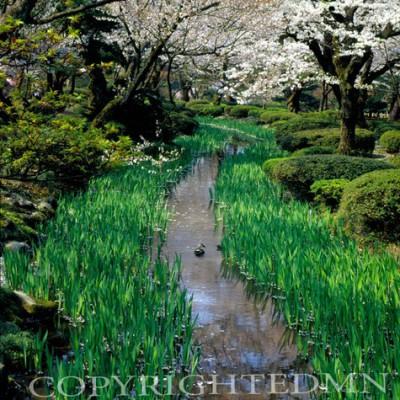 Stream At Kenrokuen Gardens, Kanazawa, Japan 05 – Color