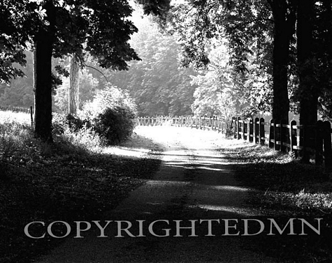 Path Into The Woods, Burgandy, France 99