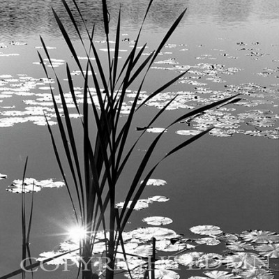 Reeds & Lilies, Harbor Springs, Michigan