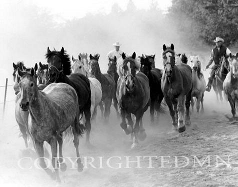 Running Horses, Rothbury, Michigan 03