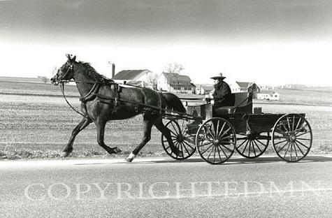 Amish Buggy, Pennsylvania