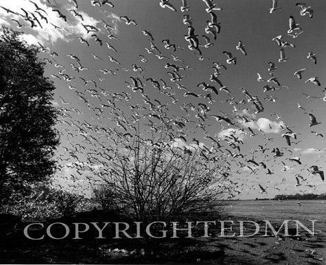 Taking Flight, Fighting Island, Michigan 97