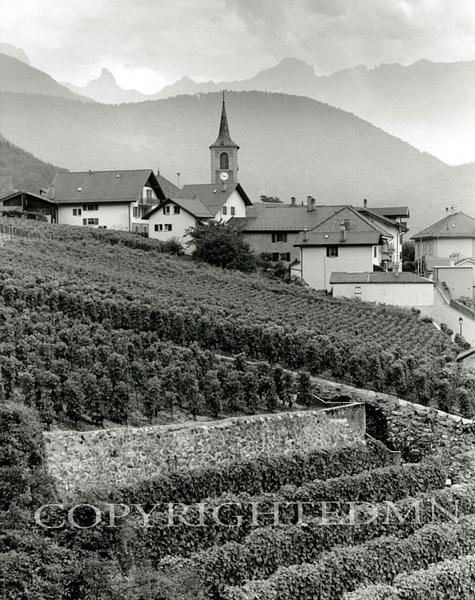 Vineyards, Epesses, Switzerland