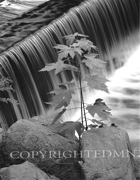 Waterfall Leaves, Bloomfield Hills, Michigan 02