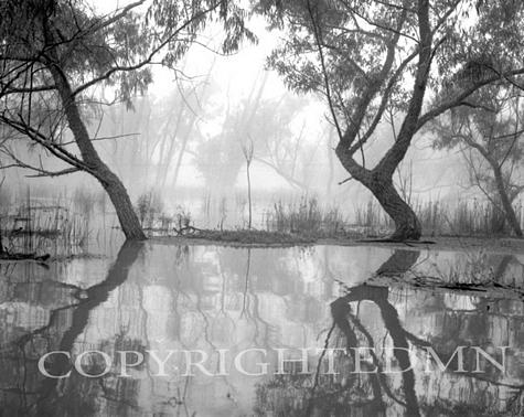 Atchafalaya Basin #3, Louisiana 97