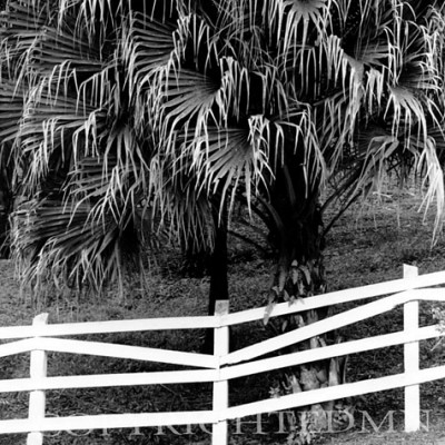 White Fence And Palms, Costa Rica 04