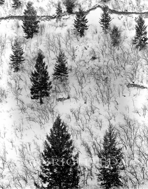 Winter Trees #2, Canada 96