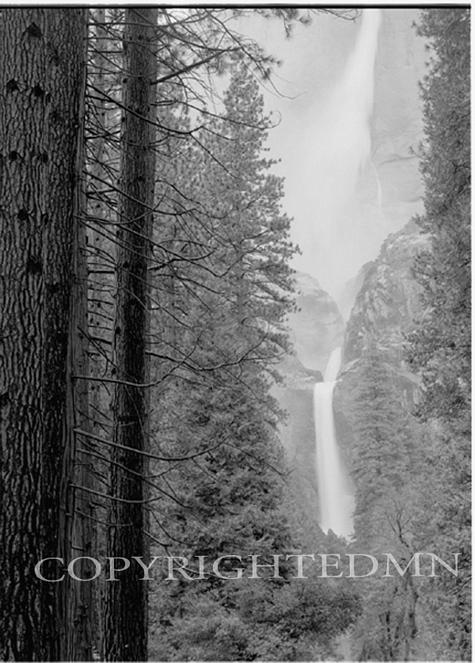 Yosemite Falls & Redwoods, California 95