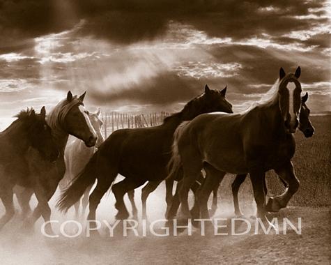 Running Horses and Sunbeams, Rothbury, Michigan 07