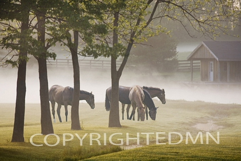 Horses in the Mist #2, Kentucky 08 – Color