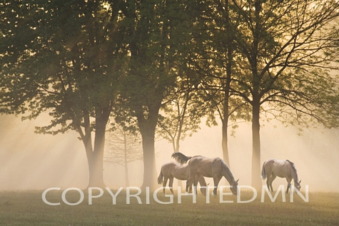 Horses in the Mist, Kentucky 08 – Color