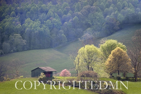 Hill Side View, Flatwoods, West Virginia 09 – color