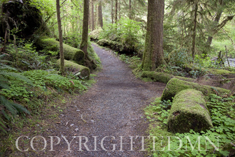 Rain Forest #1, Washington St. 09 – color