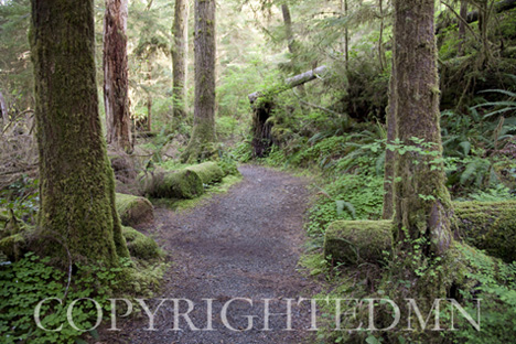 Rain Forest #2, Washington St. 09 – color
