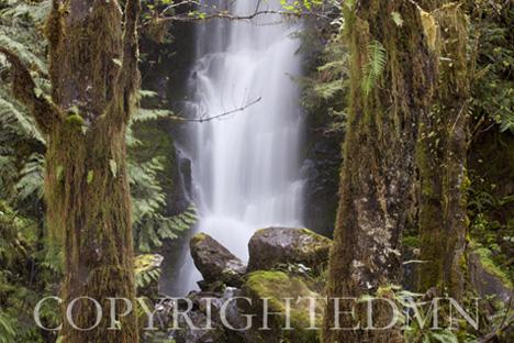 Rain Forest Falls, Washington St. 09 – color