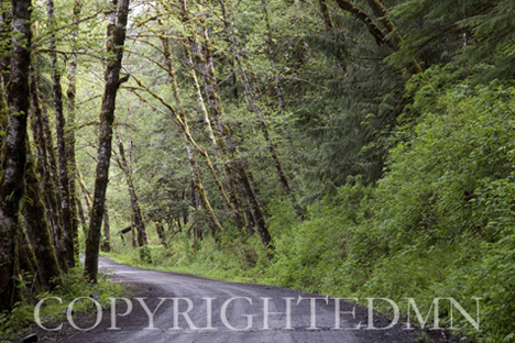 Road in the Woods, Washington St. 09 – color