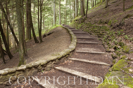 Steps into the Woods, Ohio 09 – color