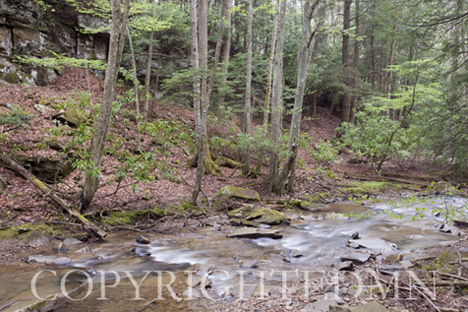 Stream & Trees, West Virginia 09 – color
