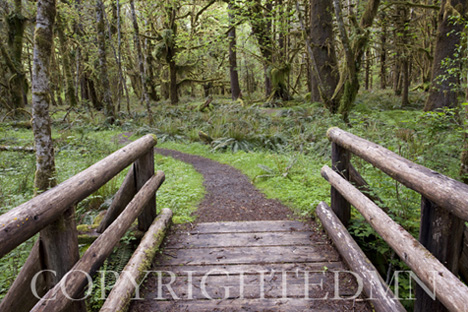 Walkway in the Woods, Washington St. 09 – color