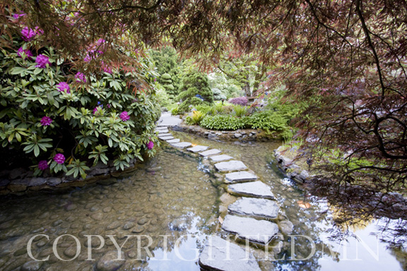 Stepping Stones at Butchart Gardens #2, Victoria, B.C. 09 – color