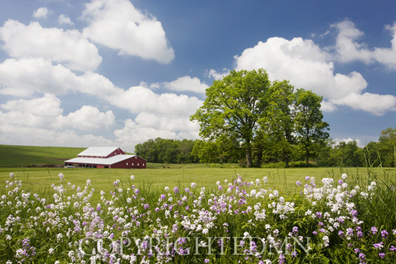 Flowers & Farm, Holmes County, Ohio 10-color