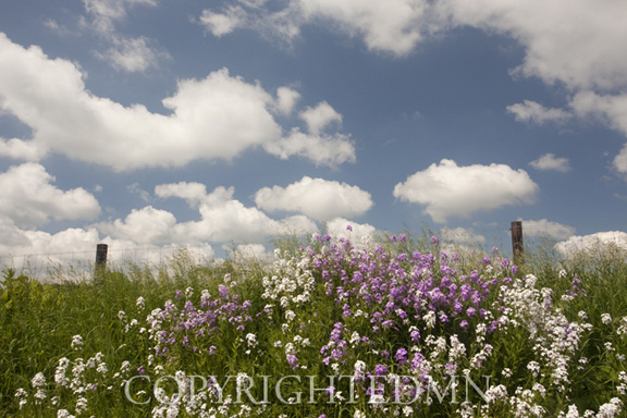 Flowers & Sky, Holmes County, Ohio 10-color