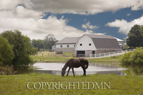 Horse & Barn, Shipshewana, Indiana 10 – color