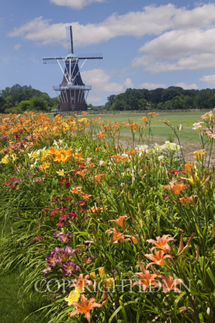 Windmill & Lillies, Holland, Michigan 10 – color