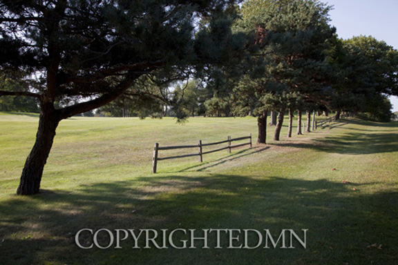 Trees & Fence, Ludington, Michigan 10 – color