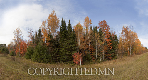 Trees in Autumn, Munising, Michigan 10-color.jpg
