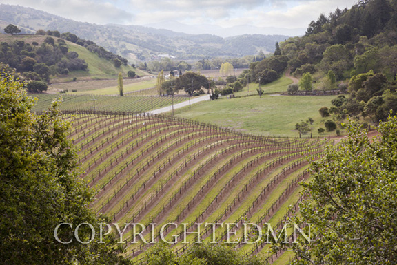 Silverado Vineyards, Napa Valley, California 11 – color