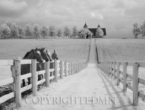 Four Horses at Manchester Farm, Lexington, Kentucky 12 – IR