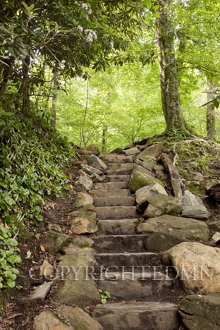 Stone Steps and Trees, Great Smokey Mountians 12 – Color
