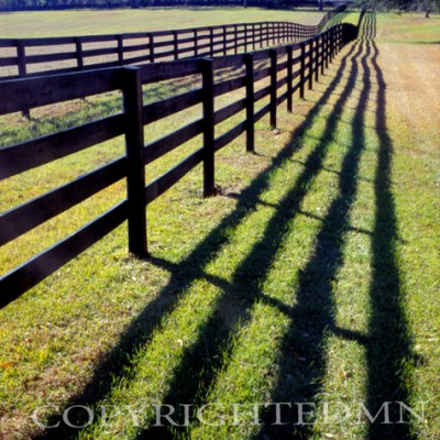 Fence & Shadows, Florida – Color