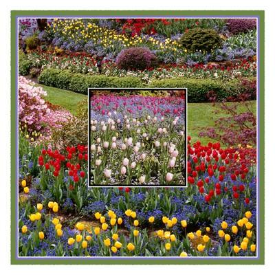 Butchart Gardens #5 - Geometric