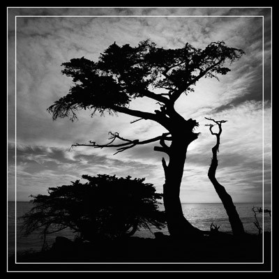 Cypress Silhouette - Geometric