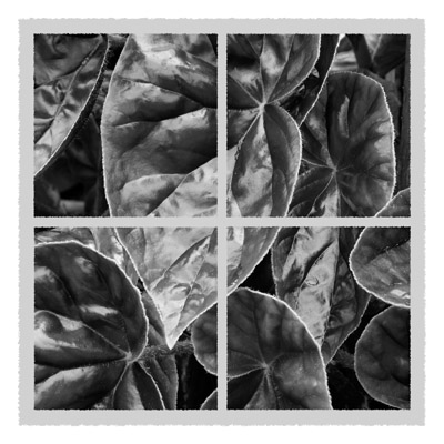 Quartet of Leaf - Geometric