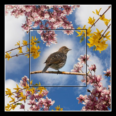 Sparrow Among the Flowers - Geometric