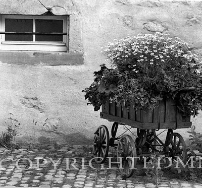 Flower Cart, Turckheim, France 87