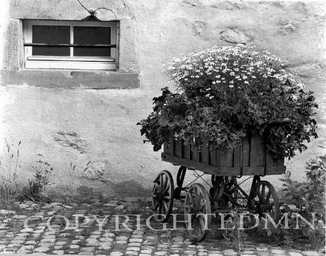 Flower Cart, Turckheim, France 87