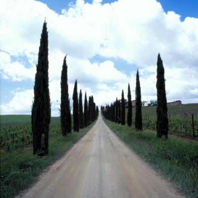 Cypress Tree Lane #2, Tuscany, Italy 06 – Color