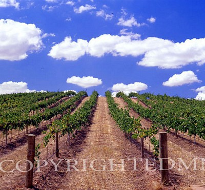 Australian Vineyards, Australia 01 – Color