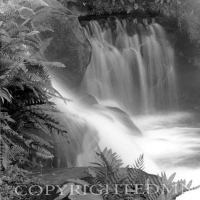 Falls & Ferns, Fortuna, Costa Rica 04