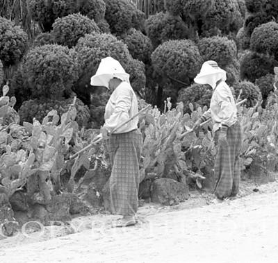 Gardeners, Korea 93