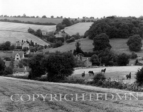 Horses In The Cotswold, Navaton, England 89