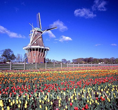 Windmill & Tulips, Holland, Michigan – Color