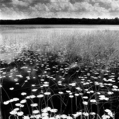 Lilly Pads On The Lake (infrared), Conway, Michigan