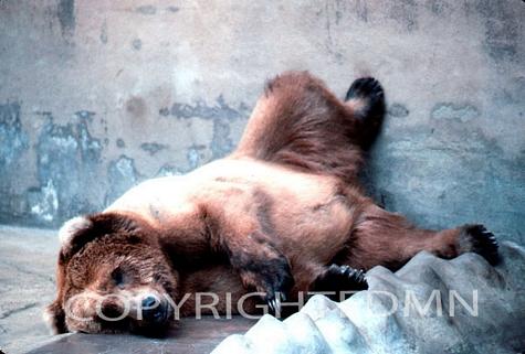 Bear #2 - Color