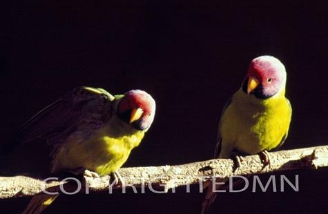 Bird #2 - Color